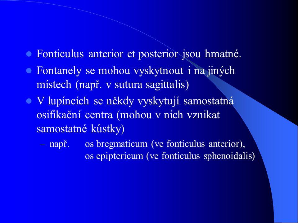 Fonticulus anterior et posterior jsou hmatné. Fontanely se mohou vyskytnout i na jiných místech (např. v sutura sagittalis) V lupíncích se někdy vysky