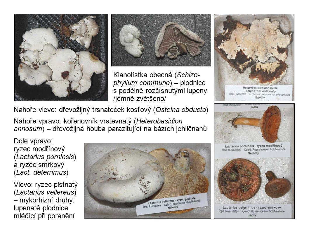 Zleva: suchohřib hnědý (Xerocomus badius), suchohřib sametový (Xerocomus pruinatus), klouzek slizký (Suillus viscidus) – mykorhizní druhy s rourkatým hymenoforem Dole vlevo: závojenka (Entoloma sp.) – pozemní saprotrofní houby s růžovějícími lupeny Uprostřed: štítovka jelení (Pluteus cervinus) – dřevožijná houba s růžovějícími lupeny Vpravo: muchomůrka růžovka (Amanita rubescens) – mykorhizní houba růžovějící při poranění