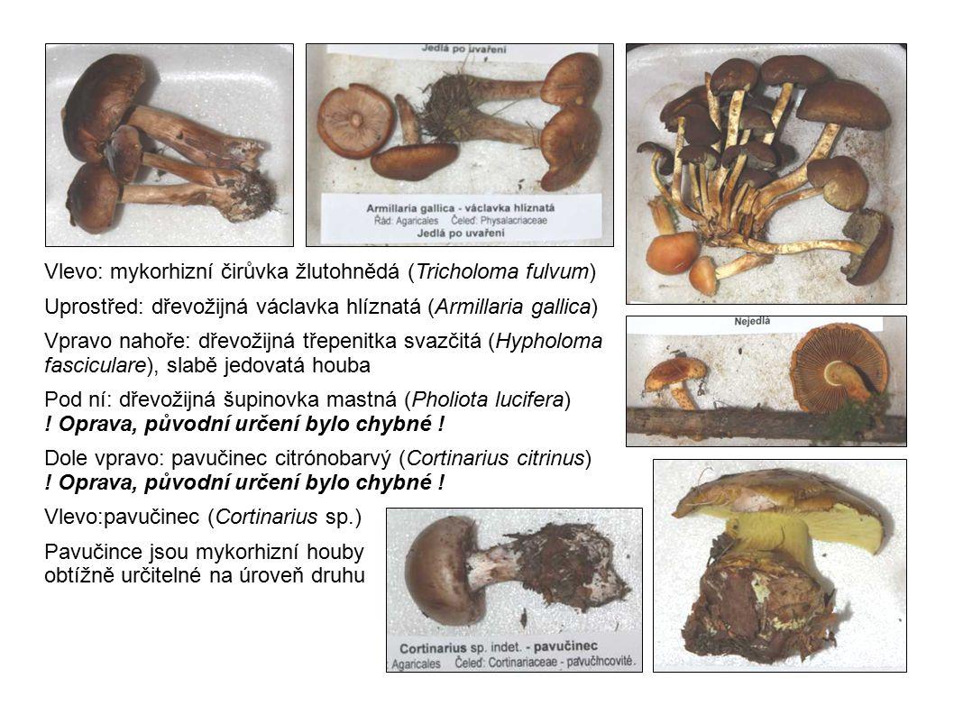 Vlevo: mykorhizní čirůvka žlutohnědá (Tricholoma fulvum) Uprostřed: dřevožijná václavka hlíznatá (Armillaria gallica) Vpravo nahoře: dřevožijná třepen