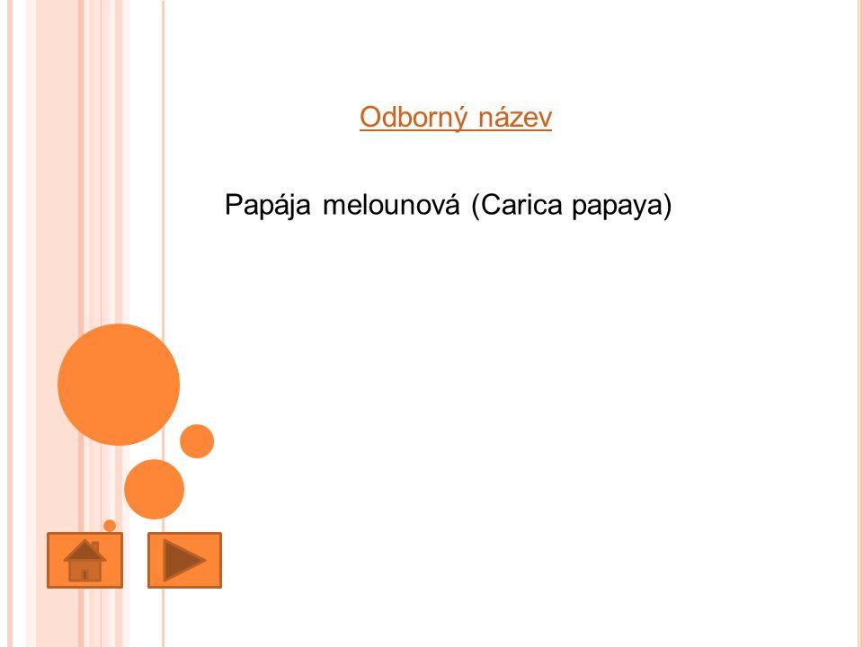 Odborný název Papája melounová (Carica papaya)