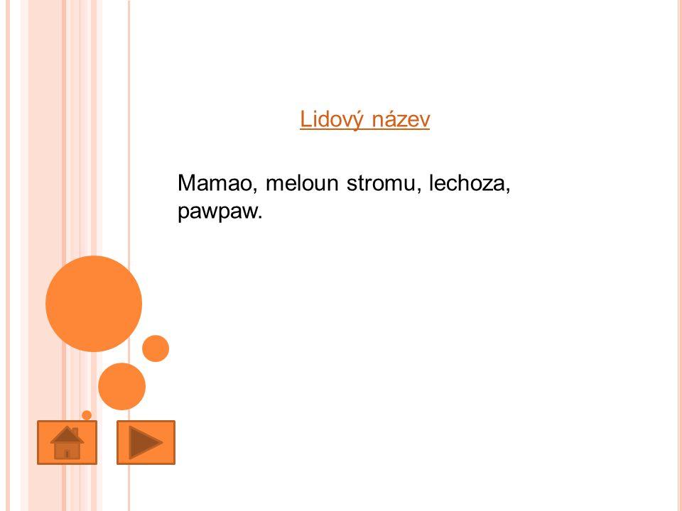 Lidový název Mamao, meloun stromu, lechoza, pawpaw.
