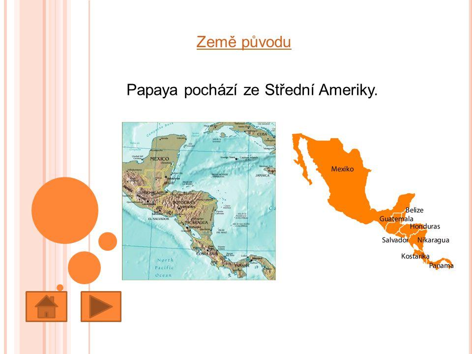 Země původu Papaya pochází ze Střední Ameriky.