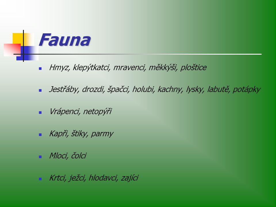 Fauna Hmyz, klepýtkatci, mravenci, měkkýši, ploštice Jestřáby, drozdi, špačci, holubi, kachny, lysky, labutě, potápky Vrápenci, netopýři Kapři, štiky, parmy Mloci, čolci Krtci, ježci, hlodavci, zajíci