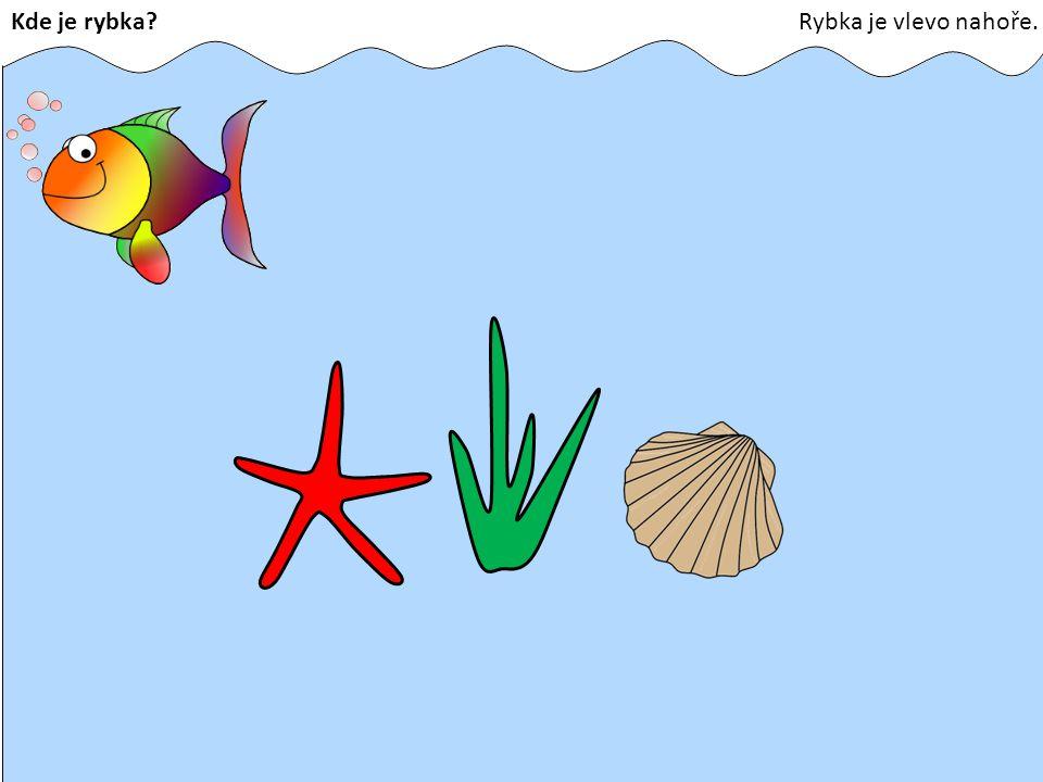 Kde je rybka Rybka je vlevo nahoře.