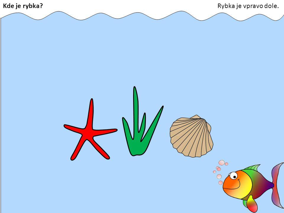 Kde je rybka Rybka je vpravo dole.