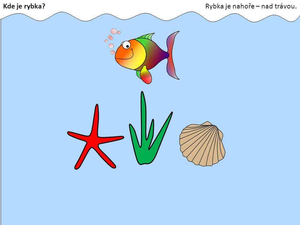 Kde je rybka Rybka je nahoře – nad trávou.