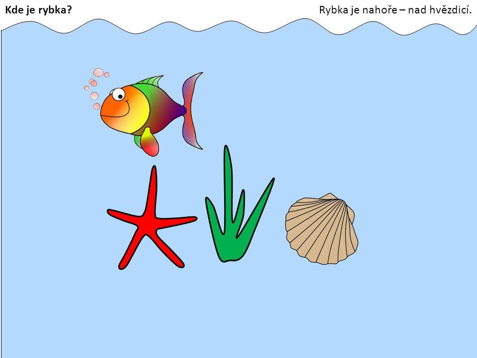 Kde je rybka Rybka je nahoře – nad hvězdicí.