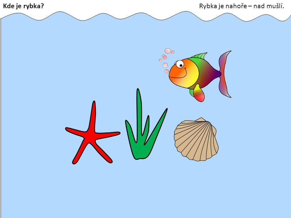 Kde je rybka Rybka je nahoře – nad mušlí.