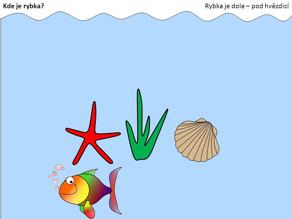 Kde je rybka Rybka je dole – pod hvězdicí