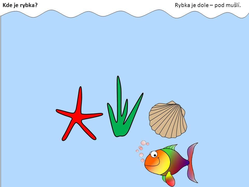 Kde je rybka Rybka je dole – pod mušlí.