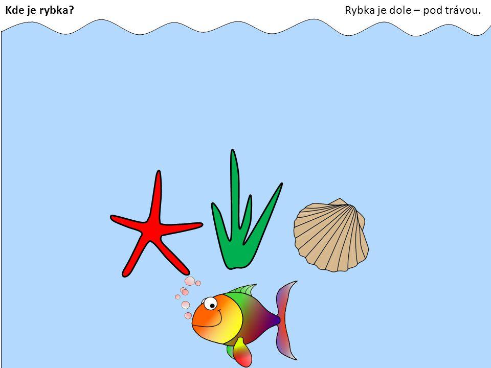 Kde je rybka Rybka je dole – pod trávou.