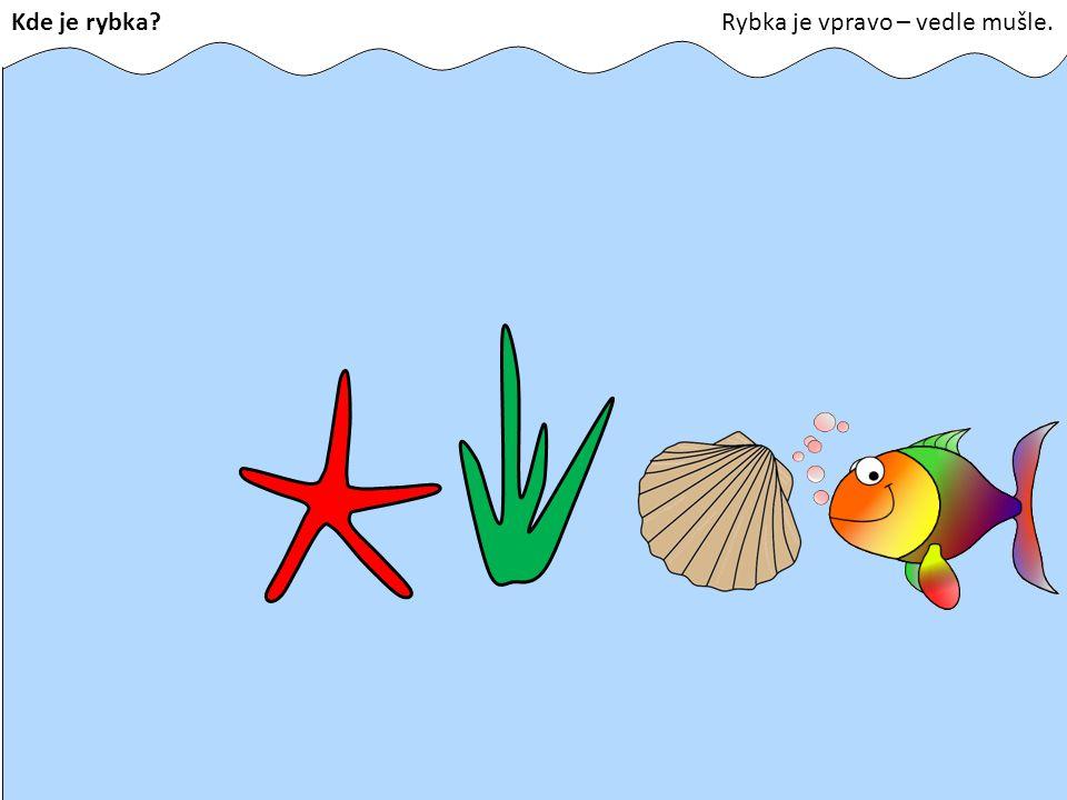 Kde je rybka?Rybka je vpravo – vedle mušle.