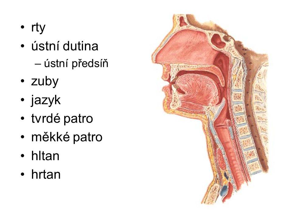 rty ústní dutina –ústní předsíň zuby jazyk tvrdé patro měkké patro hltan hrtan