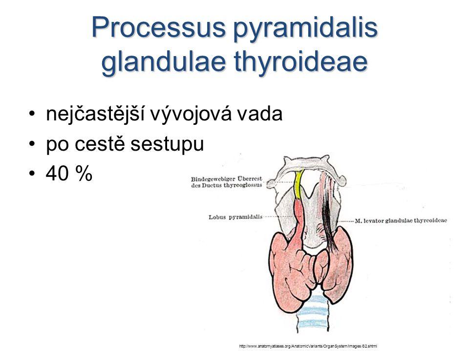 Processus pyramidalis glandulae thyroideae nejčastější vývojová vada po cestě sestupu 40 % http://www.anatomyatlases.org/AnatomicVariants/OrganSystem/Images/82.shtml