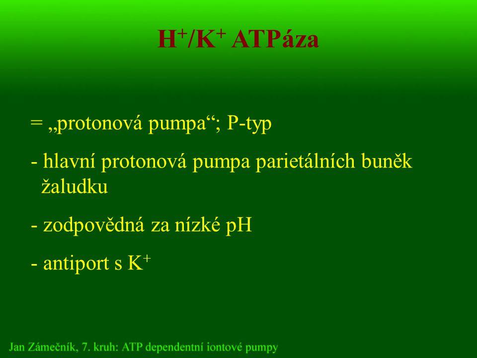 """H + /K + ATPáza = """"protonová pumpa ; P-typ - hlavní protonová pumpa parietálních buněk žaludku - zodpovědná za nízké pH - antiport s K +"""