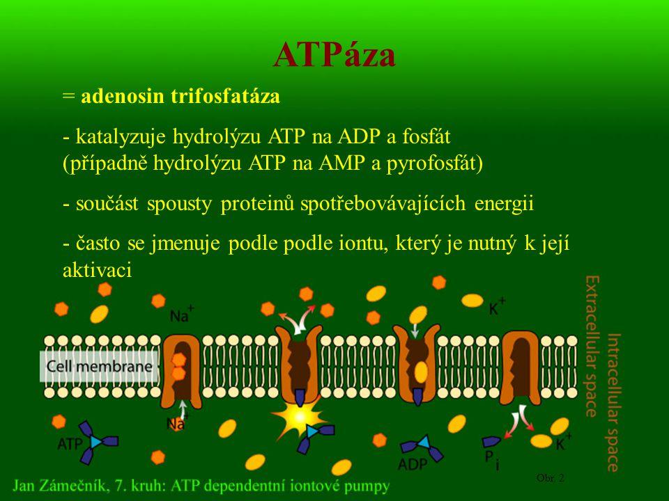 ATPáza = adenosin trifosfatáza - katalyzuje hydrolýzu ATP na ADP a fosfát (případně hydrolýzu ATP na AMP a pyrofosfát) - součást spousty proteinů spotřebovávajících energii - často se jmenuje podle podle iontu, který je nutný k její aktivaci Obr.