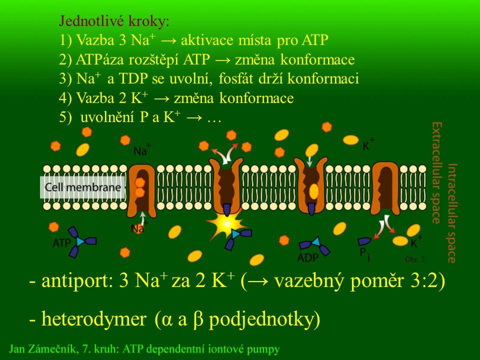 - antiport: 3 Na + za 2 K + (→ vazebný poměr 3:2) - heterodymer (α a β podjednotky) Jednotlivé kroky: 1) Vazba 3 Na + → aktivace místa pro ATP 2) ATPáza rozštěpí ATP → změna konformace 3) Na + a TDP se uvolní, fosfát drží konformaci 4) Vazba 2 K + → změna konformace 5) uvolnění P a K + → … Obr.