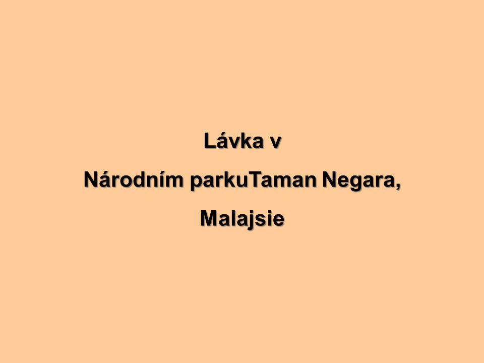 Lávka v Národním parkuTaman Negara, Malajsie