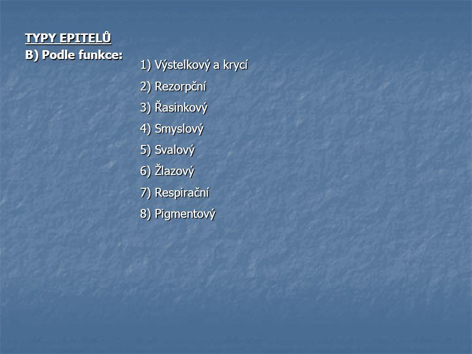 TYPY EPITELŮ B) Podle funkce: 1) Výstelkový a krycí 2) Rezorpční 3) Řasinkový 4) Smyslový 5) Svalový 6) Žlazový 7) Respirační 8) Pigmentový
