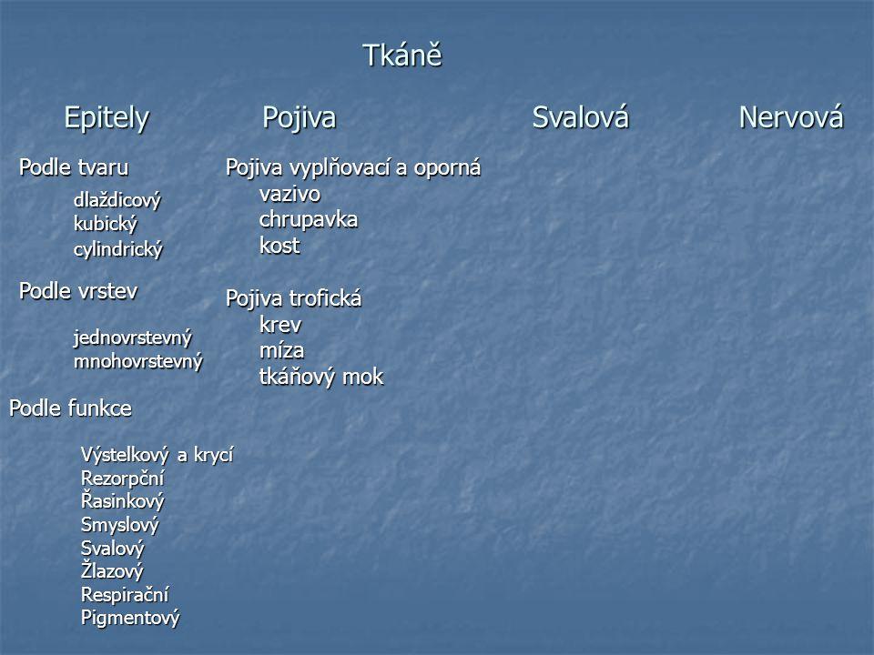 Tkáně = soubory buněk, které mají stejný tvar a vykonávají stejnou funkci Typy tkání:  Tkáň epitelová (Epitel)  Tkáň pojivová (Pojivo)  Tkáň svalová  Tkáň nervová