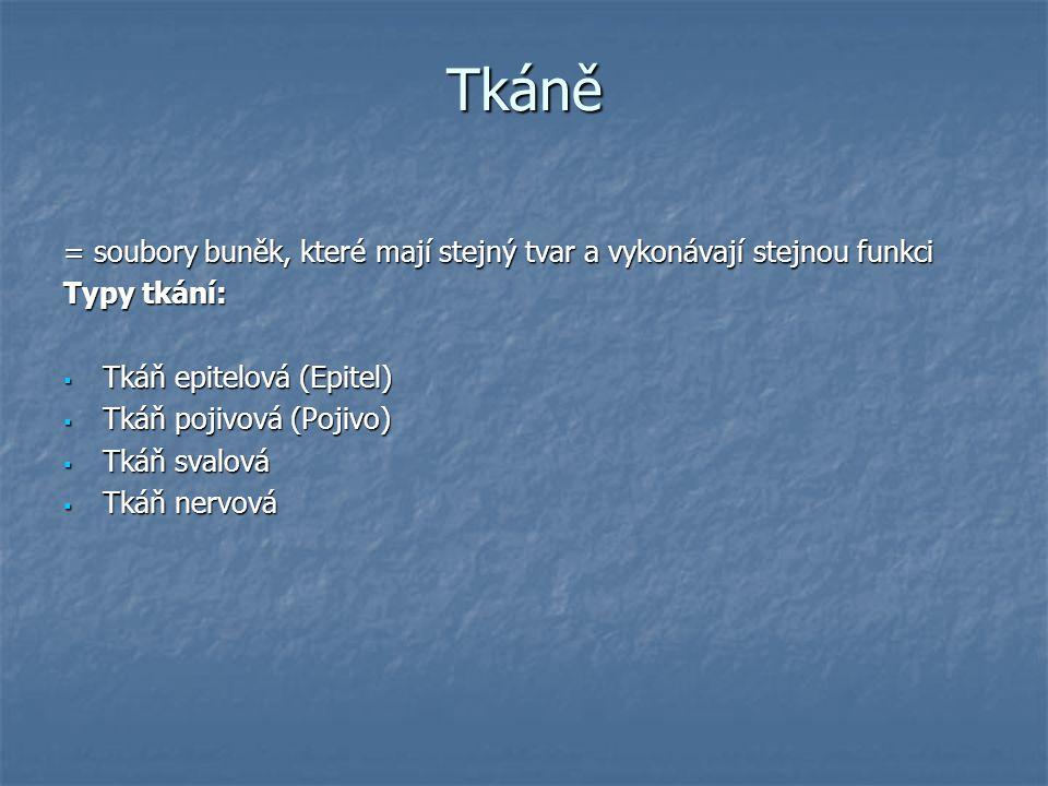 Tkáně = soubory buněk, které mají stejný tvar a vykonávají stejnou funkci Typy tkání:  Tkáň epitelová (Epitel)  Tkáň pojivová (Pojivo)  Tkáň svalov
