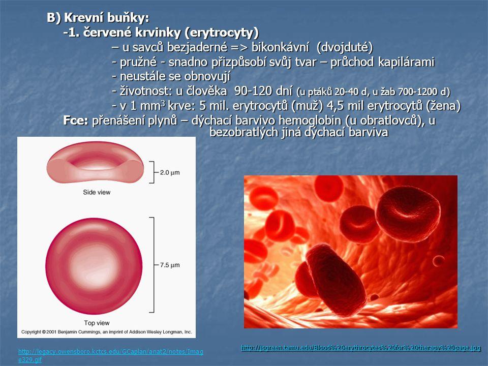 B) Krevní buňky: -1. červené krvinky (erytrocyty) – u savců bezjaderné => bikonkávní (dvojduté) - pružné - snadno přizpůsobí svůj tvar – průchod kapil