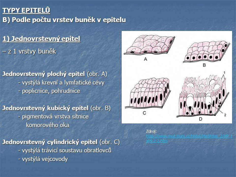 B) Pojiva trofická (krev, míza, tkáňový mok) - Tvořeny tekutou složkou a krevními buňkami - U všech živočichů kromě hub - U bezobratlých: lymfa a hemolymfa, krev (uzavřený CS) - U obratlovců: krev, lymfa, tkáňový mok Funkce:  Výměna látek a metabolitů ve tkáních  Výměna plynů ve tkáních  Rozvod produktů žláz s vnitřní sekrecí  Nositelé imunity organismu