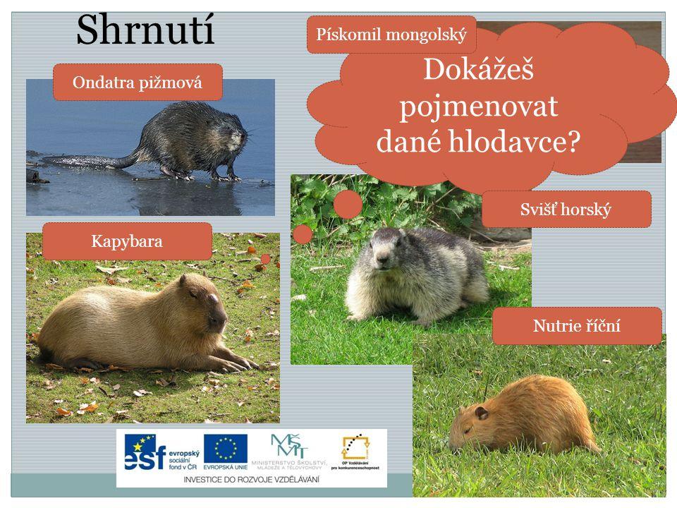 Shrnutí Dokážeš pojmenovat dané hlodavce? Ondatra pižmová Kapybara Pískomil mongolský Svišť horský Nutrie říční