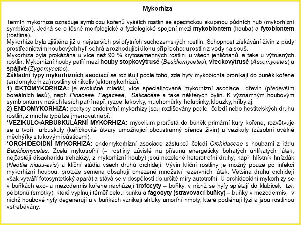 Mykorhiza Termín mykorhiza označuje symbiózu kořenů vyšších rostlin se specifickou skupinou půdních hub (mykorhizní symbióza). Jedná se o těsné morfol