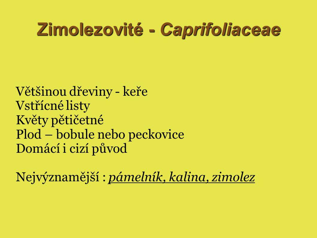 Zimolezovité - Caprifoliaceae Většinou dřeviny - keře Vstřícné listy Květy pětičetné Plod – bobule nebo peckovice Domácí i cizí původ Nejvýznamější : pámelník, kalina, zimolez