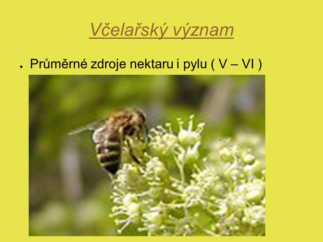 Včelařský význam ● Průměrné zdroje nektaru i pylu ( V – VI )