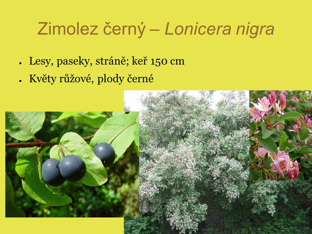 Zimolez černý – Lonicera nigra ● Lesy, paseky, stráně; keř 150 cm ● Květy růžové, plody černé