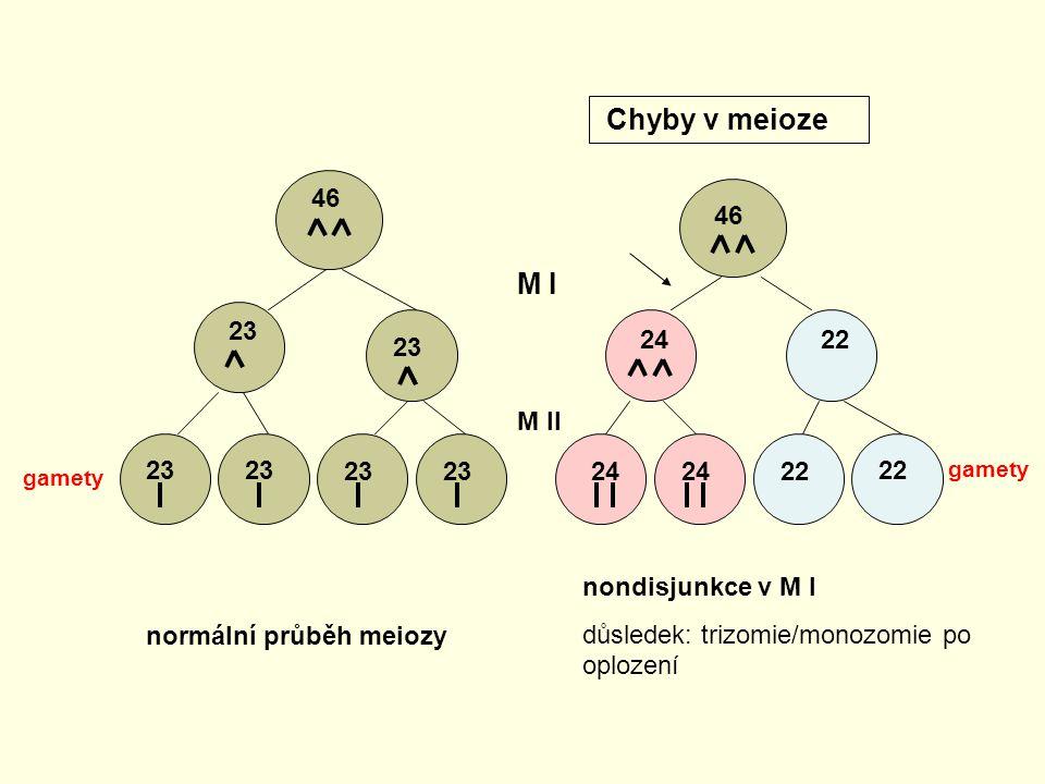 46 23 46 2422 24 22 M I M II normální průběh meiozy nondisjunkce v M I důsledek: trizomie/monozomie po oplození Chyby v meioze gamety