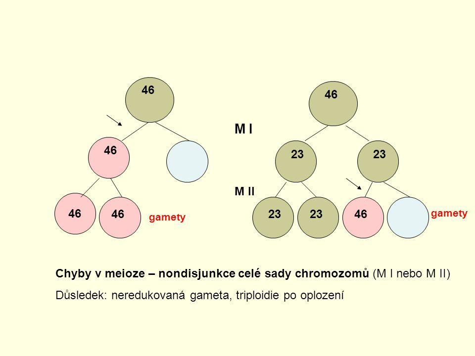 46 23 46 M I M II Chyby v meioze – nondisjunkce celé sady chromozomů (M I nebo M II) Důsledek: neredukovaná gameta, triploidie po oplození gamety
