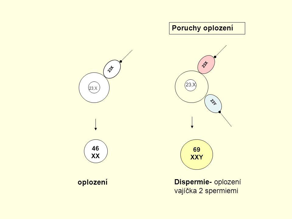 23X 23Y 23X 46 XX 69 XXY Dispermie- oplození vajíčka 2 spermiemi oplození Poruchy oplození 23,X