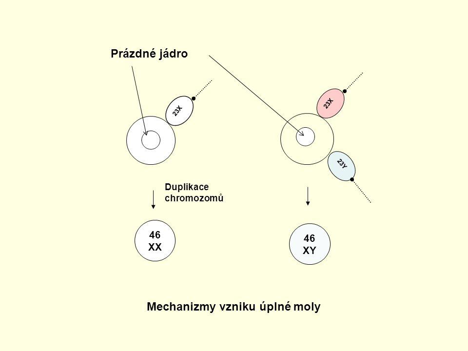23X 23Y 23X 46 XX 46 XY Mechanizmy vzniku úplné moly Duplikace chromozomů Prázdné jádro