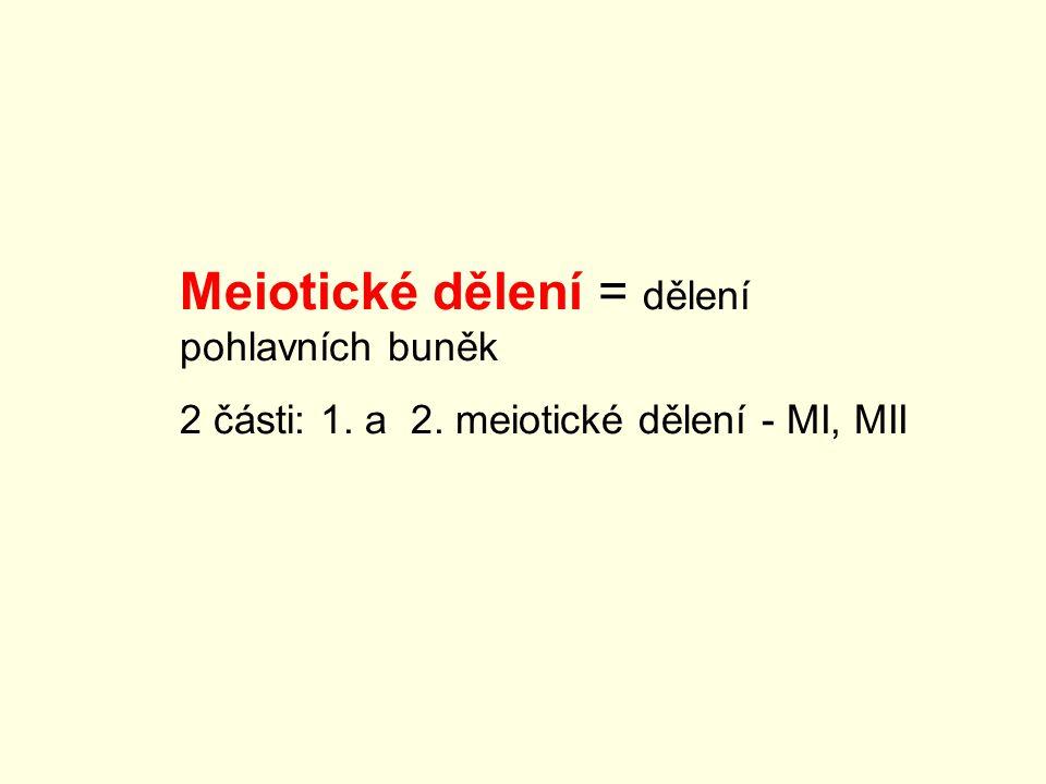 Meiotické dělení = dělení pohlavních buněk 2 části: 1. a 2. meiotické dělení - MI, MII
