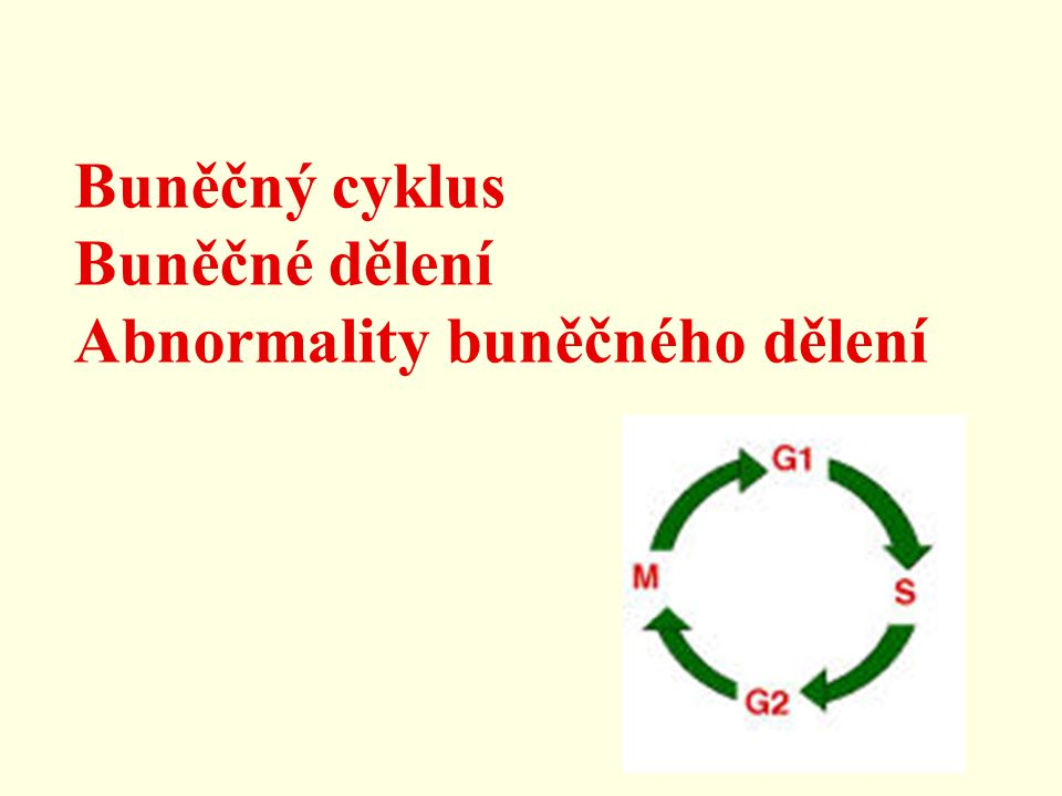 Buněčný cyklus interfáze : G1, S, G2 mitoza Interfáze: G1 fáze - nejdelší, variabilní část cyklu syntéza RNA, proteinů, doplnění organel (ribozomů, mitochondrií, ER apod.) syntéza nukleotidů, příprava na replikaci kontrolní bod cyklu pro vstup do S fáze