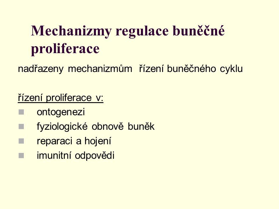 Mechanizmy regulace buněčné proliferace nadřazeny mechanizmům řízení buněčného cyklu řízení proliferace v: ontogenezi fyziologické obnově buněk repara