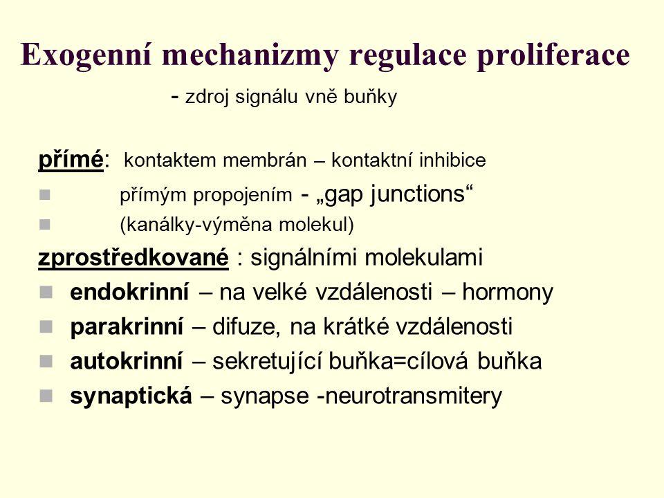 """Exogenní mechanizmy regulace proliferace - zdroj signálu vně buňky přímé: kontaktem membrán – kontaktní inhibice přímým propojením - """"gap junctions"""" ("""