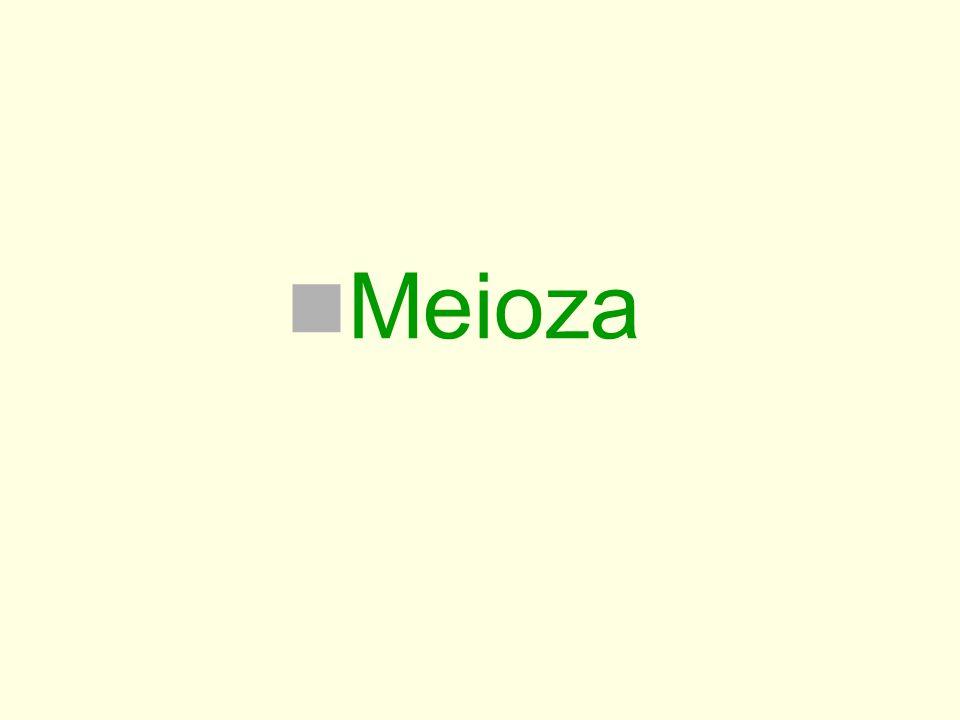 Meioza