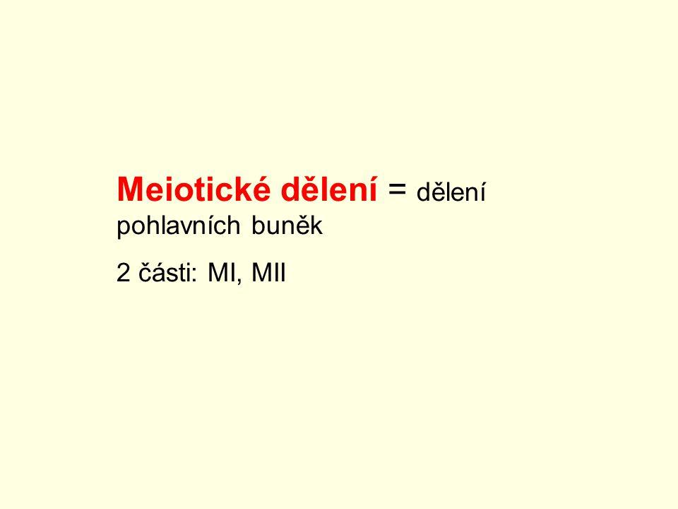 Meiotické dělení = dělení pohlavních buněk 2 části: MI, MII