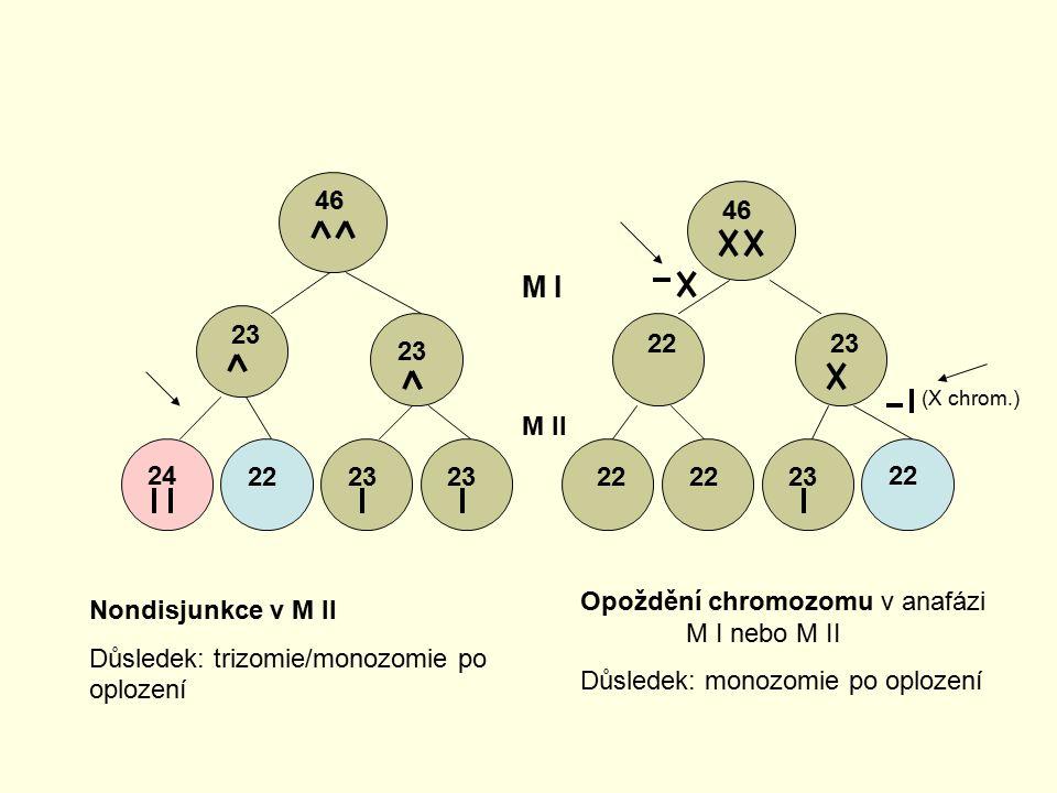 46 23 24 2223 46 2223 22 23 22 M I M II Nondisjunkce v M II Důsledek: trizomie/monozomie po oplození (X chrom.) Opoždění chromozomu v anafázi M I nebo