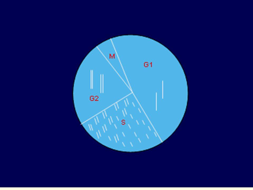 Dělení somatických buněk = mitoza = z diploidní mateřské buňky dvě diploidní dceřinné