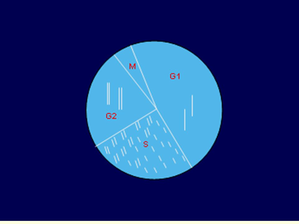 oogonie primární sekundární oocyt polové tělísko 2n n I.