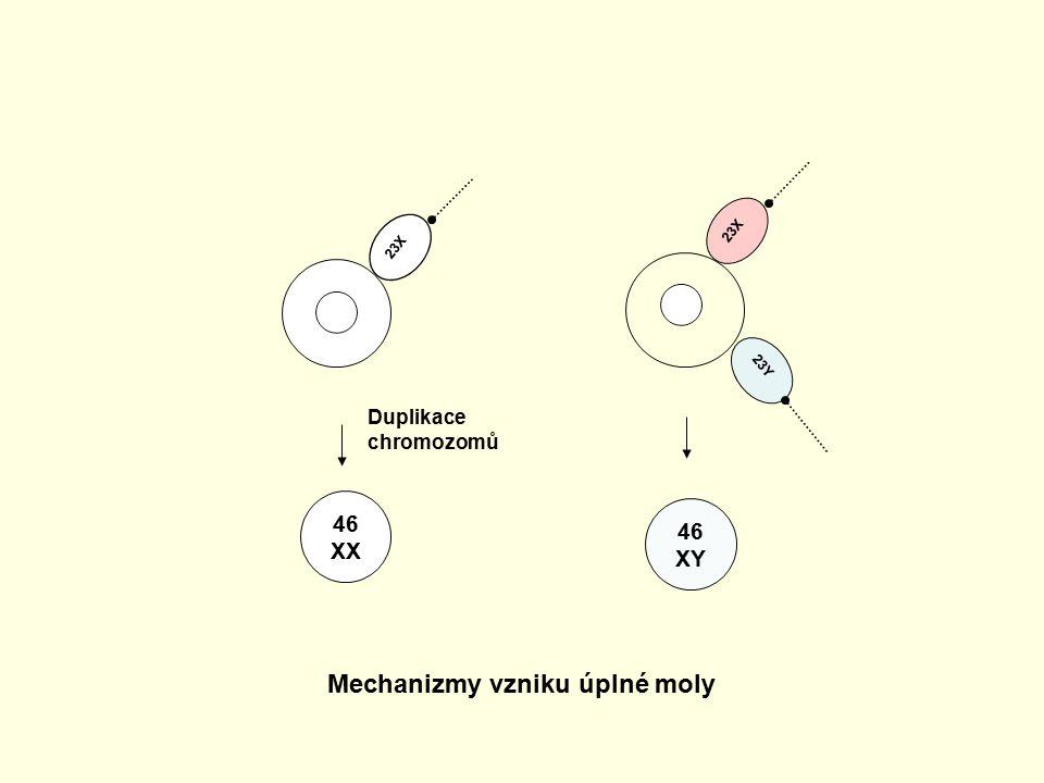 23X 23Y 23X 46 XX 46 XY Mechanizmy vzniku úplné moly Duplikace chromozomů