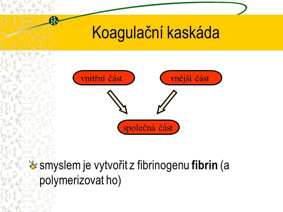 Koagulační kaskáda smyslem je vytvořit z fibrinogenu fibrin (a polymerizovat ho) vnitřní částvnější část společná část