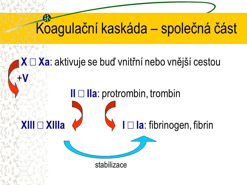 Koagulační kaskáda – společná část X  Xa : aktivuje se buď vnitřní nebo vnější cestou II  IIa : protrombin, trombin XIII  XIIIa I  Ia : fibrinogen