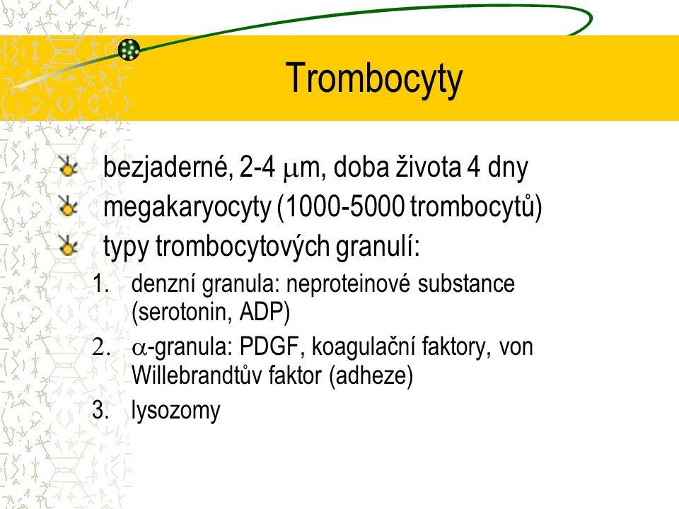 Trombocyty bezjaderné, 2-4  m, doba života 4 dny megakaryocyty (1000-5000 trombocytů) typy trombocytových granulí: 1.denzní granula: neproteinové sub