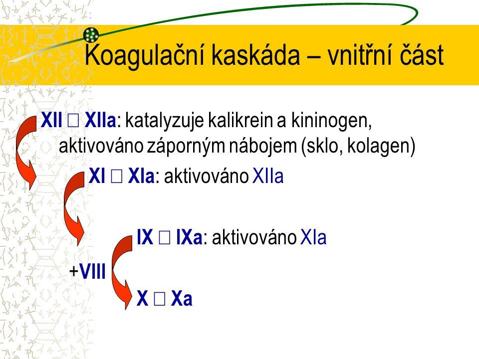 Koagulační kaskáda – vnitřní část XII  XIIa : katalyzuje kalikrein a kininogen, aktivováno záporným nábojem (sklo, kolagen) XI  XIa : aktivováno XI